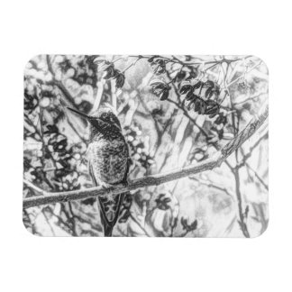 Hummingbird in Black and White Flexible Magnet