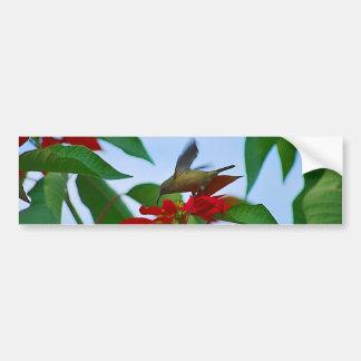 Hummingbird in flight car bumper sticker