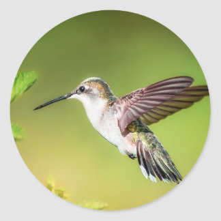 Hummingbird in flight classic round sticker
