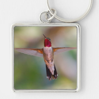 hummingbird in flight keychain