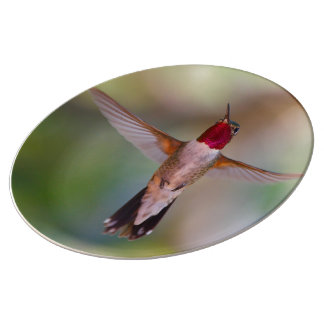 hummingbird in flight porcelain plate