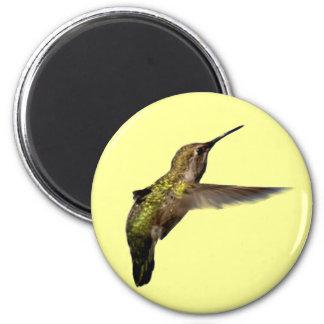 Hummingbird in Flight Round Magnet