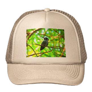 Hummingbird in Profile Trucker Hats