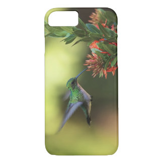 Hummingbird iPhone 8/7 Case