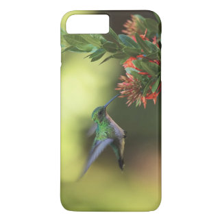 Hummingbird iPhone 8 Plus/7 Plus Case