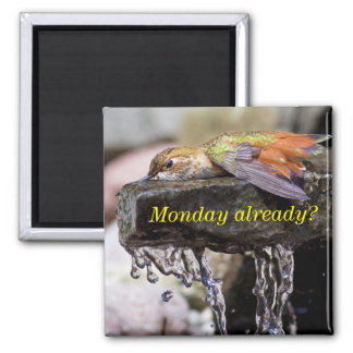 Hummingbird  Laying in Water 2 2 Inch Square Magnet