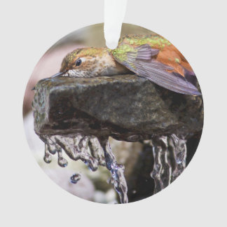 Hummingbird  Laying in Water Ornament