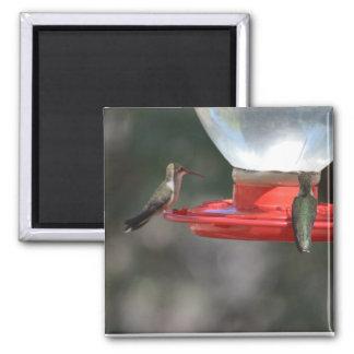 Hummingbird magnet