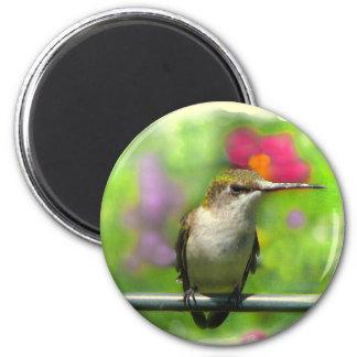 Hummingbird 6 Cm Round Magnet