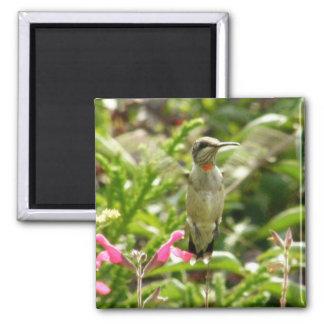 Hummingbird & Maraschino Magnet