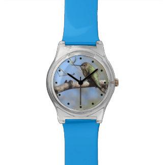 Hummingbird Watches