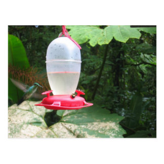 Hummingbird - Monteverde, Costa Rica Postcard