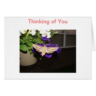 Hummingbird Moth & Petunias, Thinking of You Card