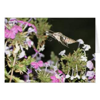 Hummingbird Moth & Phlox Card