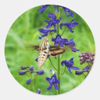 Hummingbird moth round sticker