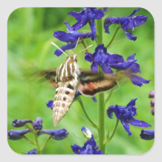 Hummingbird moth square sticker