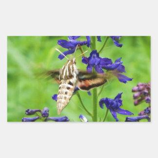 Hummingbird moth rectangle stickers