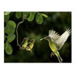 Hummingbird Mother Postcard