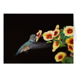Hummingbird Note Card (blank)