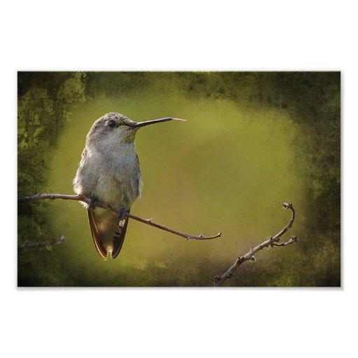 Hummingbird on a twig photo art