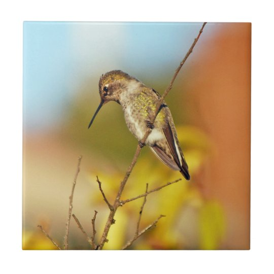 Hummingbird on branch small square tile