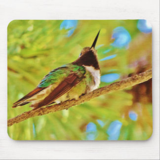 Hummingbird on evergreen mouse pads