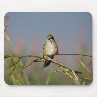 hummingbird on grass mouse pad