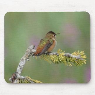 Hummingbird on pine mousepads
