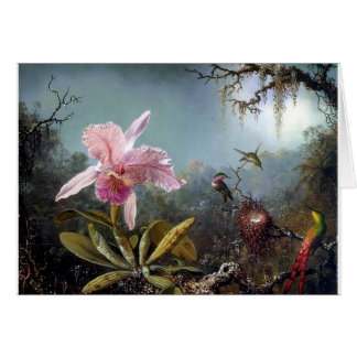 Hummingbird orchid flower tropical forest painting card