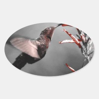 Hummingbird Oval Sticker