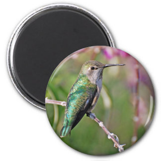 Hummingbird Perch II 6 Cm Round Magnet