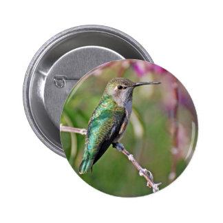 Hummingbird Perch II Pinback Buttons