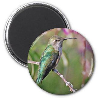 Hummingbird Perch II Refrigerator Magnet