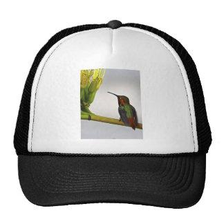 Hummingbird Posing Trucker Hat