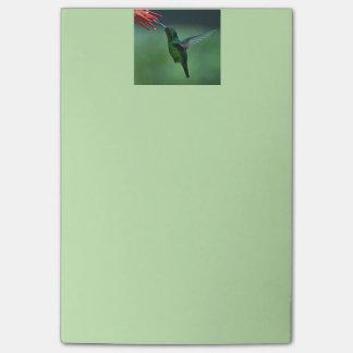 Hummingbird post it notes