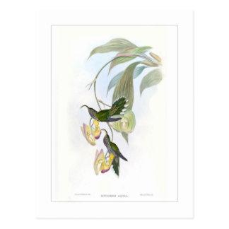 Hummingbird Post Card
