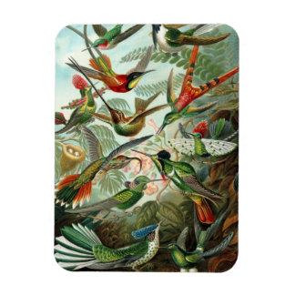 Hummingbird Premium Magnet