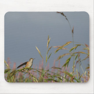 Hummingbird rest mouse pads