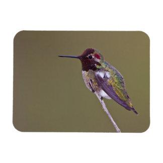 Hummingbird resting magnet