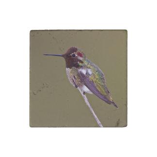 Hummingbird resting stone magnet