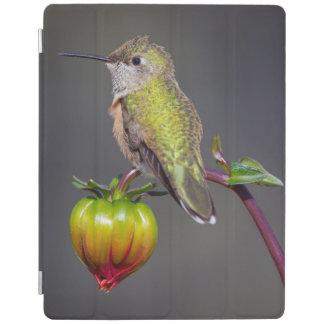 Hummingbird rests on flower bud iPad cover