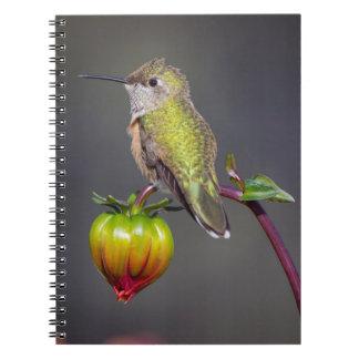 Hummingbird rests on flower bud notebook