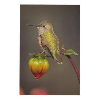 Hummingbird rests on flower bud wood wall art