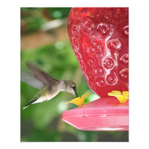 Hummingbird Sipping Personalized Flyer