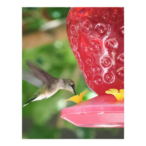 Hummingbird Sipping Flyer Design