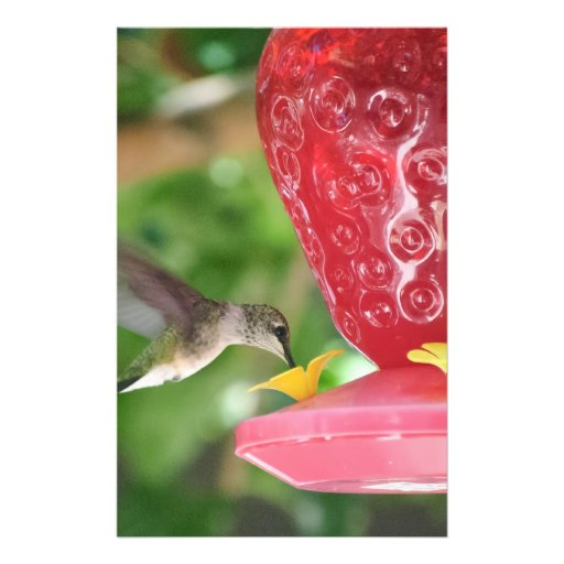 Hummingbird Sipping Full Color Flyer