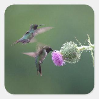 Hummingbird Square Sticker