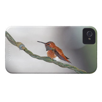 Hummingbird Sticking Out Tongue iPhone 4 Cover