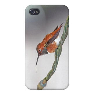 Hummingbird Sticking Out Tongue Cover For iPhone 4