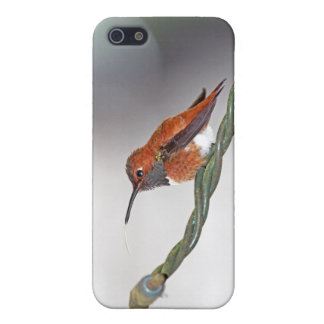 Hummingbird Sticking Out Tongue iPhone 5 Covers